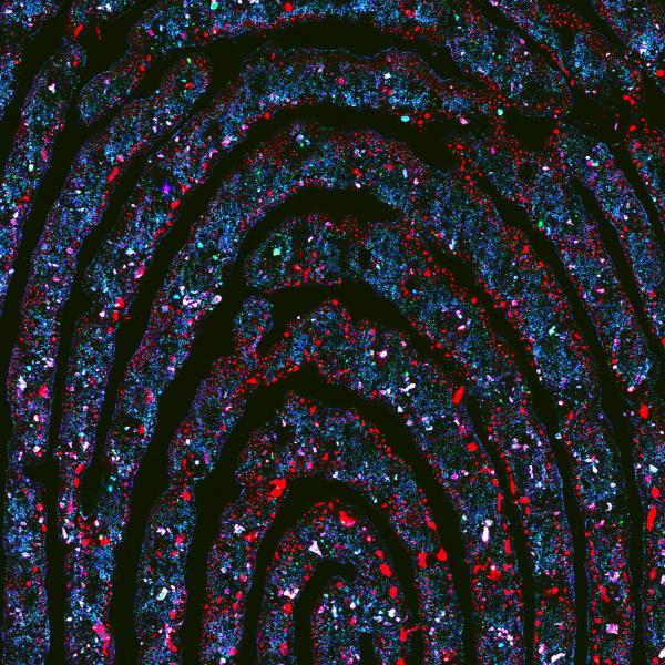 Analysis of fingerprints with synchrotron techniques provides a complete picture
