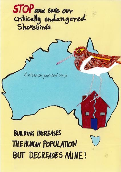Donburn - Melbourne Shorebirds
